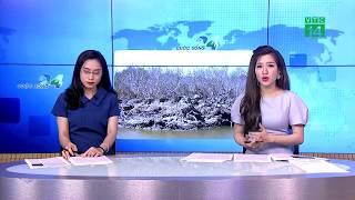 VTC14 | Bà Rịa Vũng Tàu: nhiều diện tích rừng ngập mặn chết hàng loạt