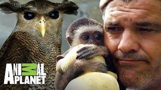 los-animales-salvados-por-frank-cuesta-wild-frank-al-rescate-animal-planet