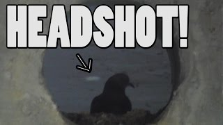 Pigeon Hunting with Blowgun and Slingshot! Double Kill!