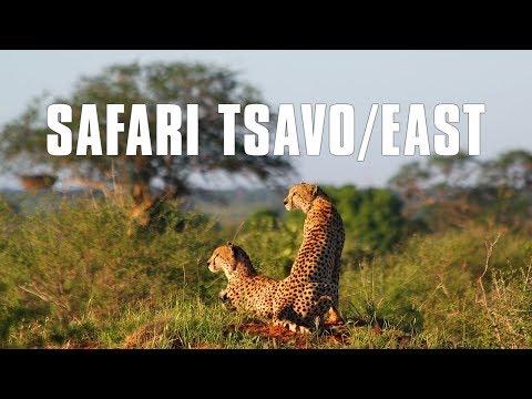 Safari von Malindi - Safari zum Tsavo/East National Park im 2015 - präsentiert von malindi.info