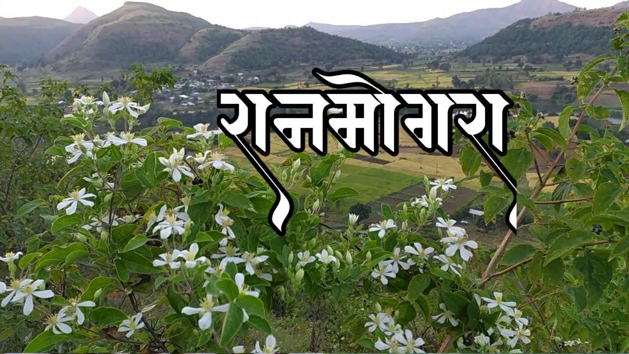रानमोगरा । सह्याद्रीच्या कुशीतील आश्विन महिन्यातील। अनोखा नजारा । Beautifull Sayadri