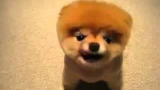Много смеха. Очень смешная собака - не игрушка!!! Отпад!