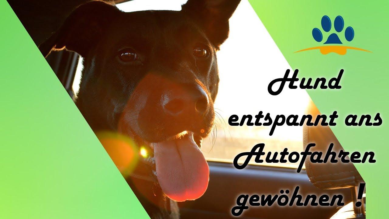 hund hat angst vor dem autofahren 4 schritte so gew hnst du dein hund entspannt ans autofahren. Black Bedroom Furniture Sets. Home Design Ideas