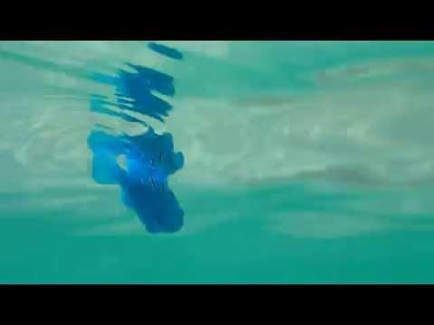 Blå robotfisk på simtur 5836b1001bab6