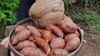 Awesome Dessert Sweet Potato With Coconut-Cooking Dessert Recipe-Village Food Factory-Cooking show