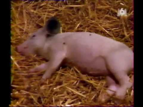 À la poursuite de Fritz le petit cochon-Film complet FR streaming vf