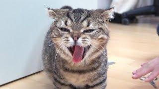 자기가 멍멍인줄 아는 고양이