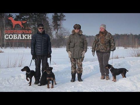 Охотничьи собаки. 14 серия. Немецкий ягдтерьер