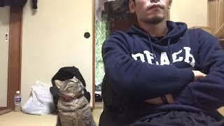 飼い猫のにゃろめさんが珍しくかまってモードなので無視してみました。 ...