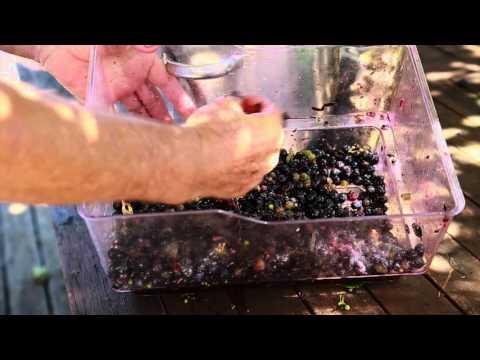 How To Make Italian Red Wine Vinegar