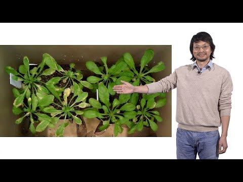 Sheng-Yang He (Michigan State U. and HHMI) 2: The effect of climate in plant disease