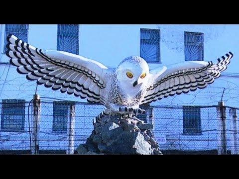 Град обреченных: о жалобах на жизнь тех, кто отбывает наказание в печально известной «Полярной сове»
