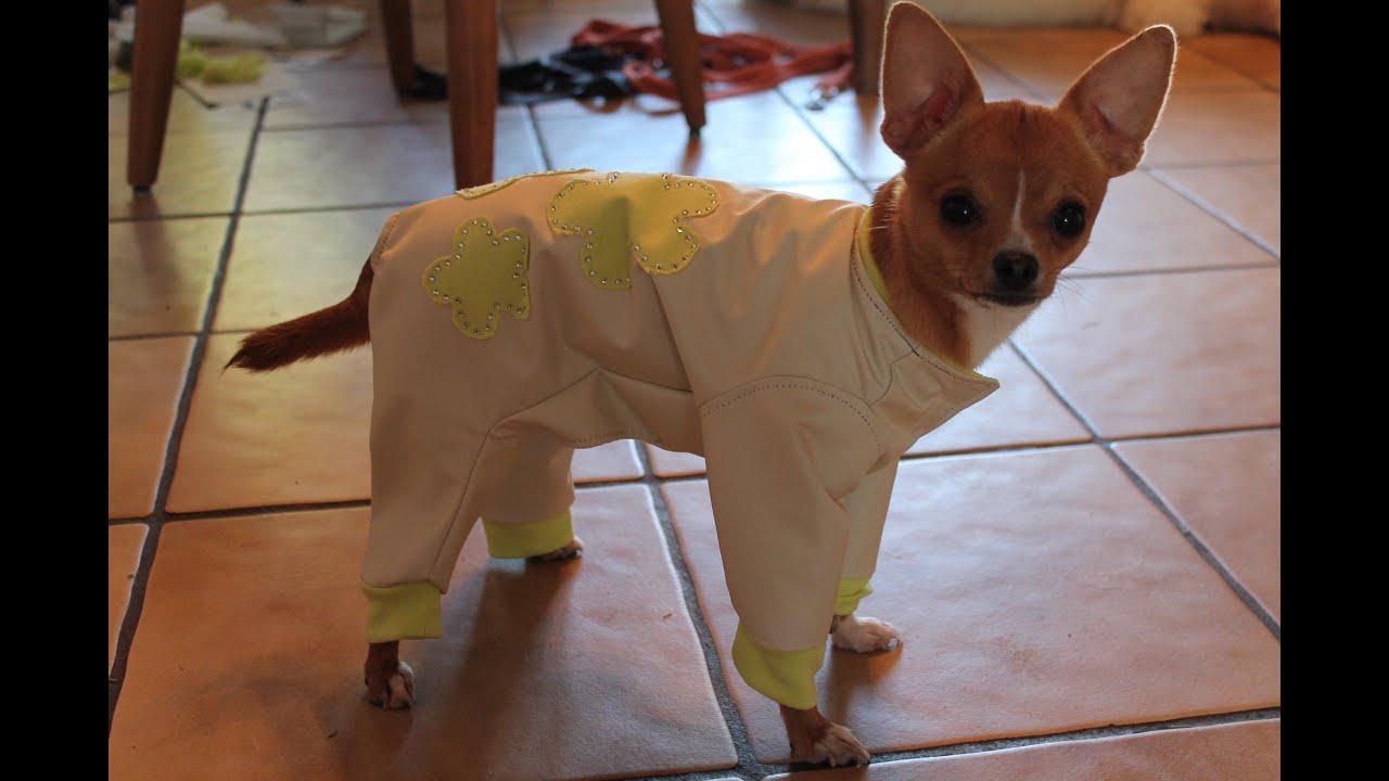 Пошив одежды собакам своими руками