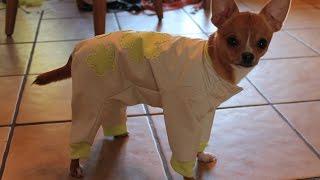 Одежда для собак. Как сшить комбинезон.  DIY. Sewing Pet clothing ( Sew a rain-coat.)(http://youtu.be/XNmTx4VHblk - Как сшить трусики для собаки. How to Sew Dog Pants. http://youtu.be/v42mzXGJ_q8 - Как пошить футболку для собаки..., 2014-09-29T16:14:46.000Z)