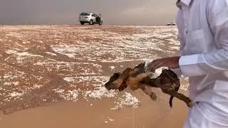 """فيديو مؤثر.. مواطن ينقذ """"جروين"""" جرفتهما مياه السيول في رماح"""
