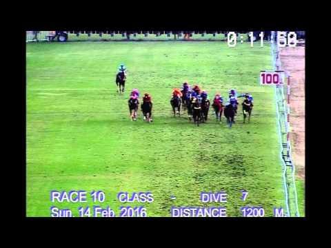 ม้าแข่งสนามฝรั่ง 14 กุมภาพันธ์ 59 เที่ยว10 ชั้น7