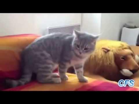 Con mèo ngu nhất HÀNH TINH .... vãi mèo