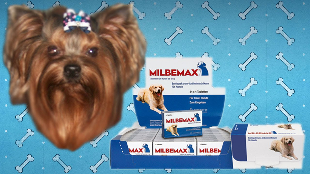 инструкция+по+применению+метронидазола+в+ветеринарии