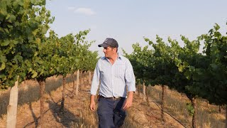 ICC Sydney Wine Documentary 100% Local: Tom Ward from Swinging Bridge Wines
