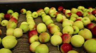 Jorma Jaakkolan omenatuotanto