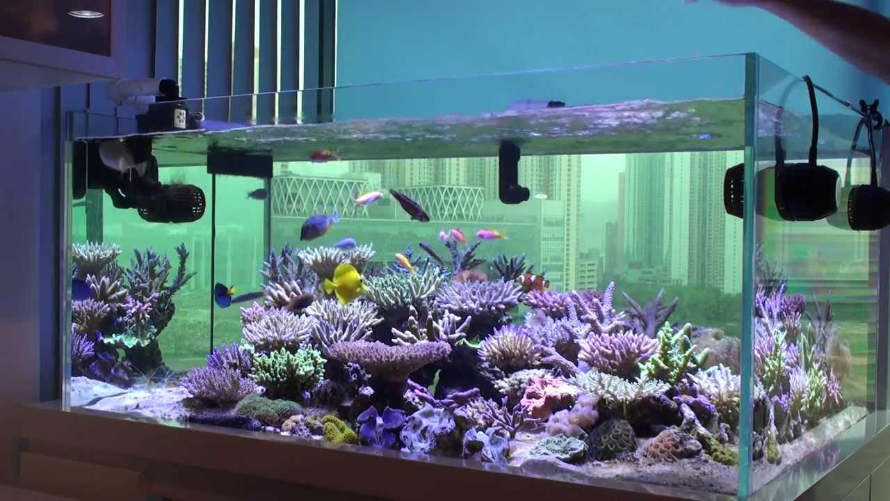 Bon's Lagoon Feeding Time - YouTube