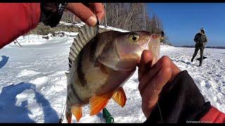 КИЛОГРАММОВЫЕ ОКУНИ и МЯСО НА КОСТРЕ !!! Окуни -МОНСТРЫ.!Рыбалка на безмотылку.