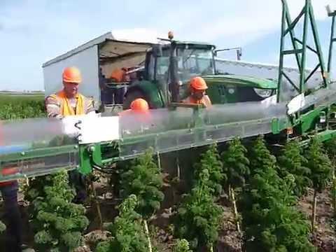 Kale Harvester