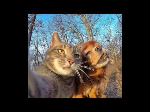 Selfie Taking Cat