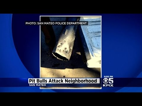 San Mateo Police Officer Runs Over 2 Loose Pit Bulls After Dogs Attacked Several People