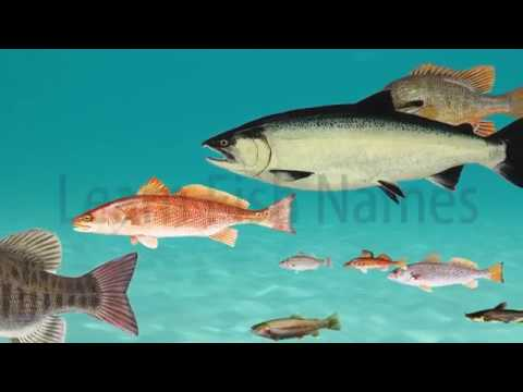 Learning River Fish Names
