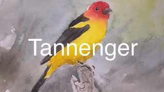 How to Paint a Bird in Watercolour Watercolor Tanager Tutorial Red Orange Yellow Wing