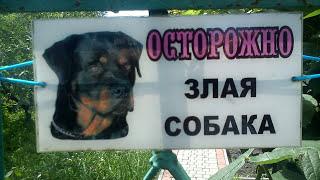 ЧТО ДЕЛАТЬ ЕСЛИ НА ВАС НАПАЛА СОБАКА?!(ТОП10 САМЫХ УМНЫХ СОБАК В МИРЕ!!! https://goo.gl/P9RAB2 Собаки – дружелюбные животные. Однако бывают случаи, когда..., 2016-02-28T08:38:51.000Z)