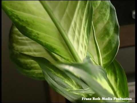 Besseres wohnklima mit zimmerpflanzen youtube for Raumgestaltung mit zimmerpflanzen
