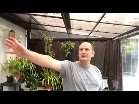 orchid plant Cymbidium Renee Taylor /'May Ling/'
