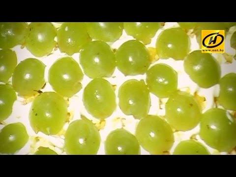 Салат с виноградом, куриное филе и диета, рецепт