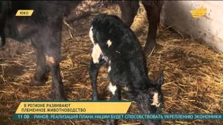 видео Где купить товары для животноводства