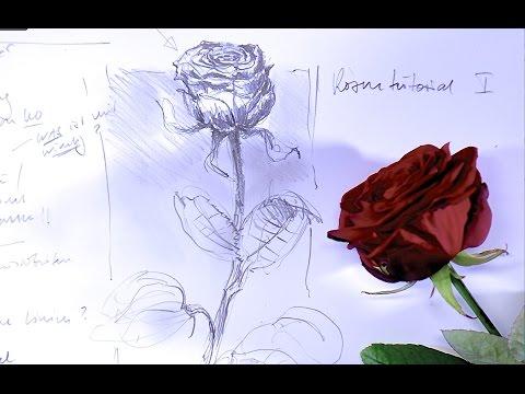 Einfach rosen malen Rosen Malen