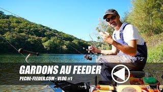 Roach on feeder - Peche-feeder VLOG#1