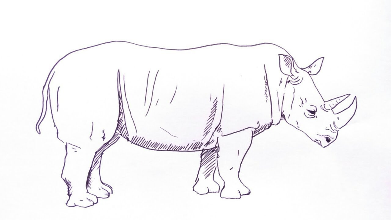 Cara Menggambar Badak How To Draw Rhino Youtube