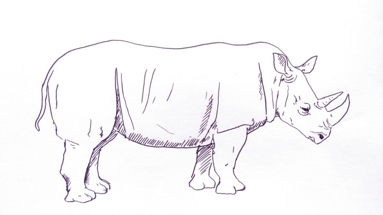 Cara Menggambar Badak How To Draw Rhino Youtube