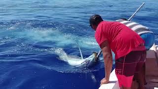 Pêche espadon 168kg Eric Paroo-Bora Bora