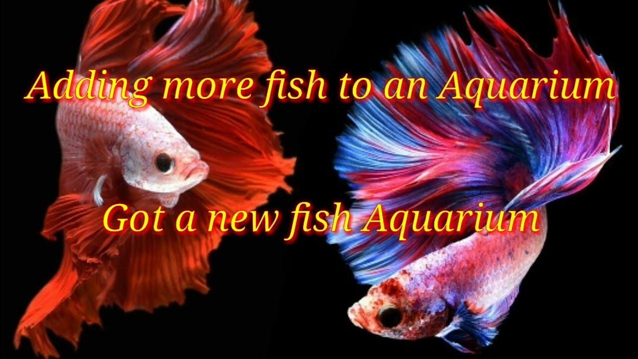Adding More Fish to an Aquarium - Got a New Fish Aquarium - Shark - Gold Fish - By Daniel Mark