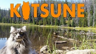 Siberian cat climbing trees and watching ducks at Lilly Pad lake