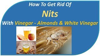 how to get rid of nits and lice in one day