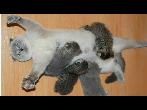 Cat Moms Nursing Their Cute Baby Kittens Videos Compilation 2018