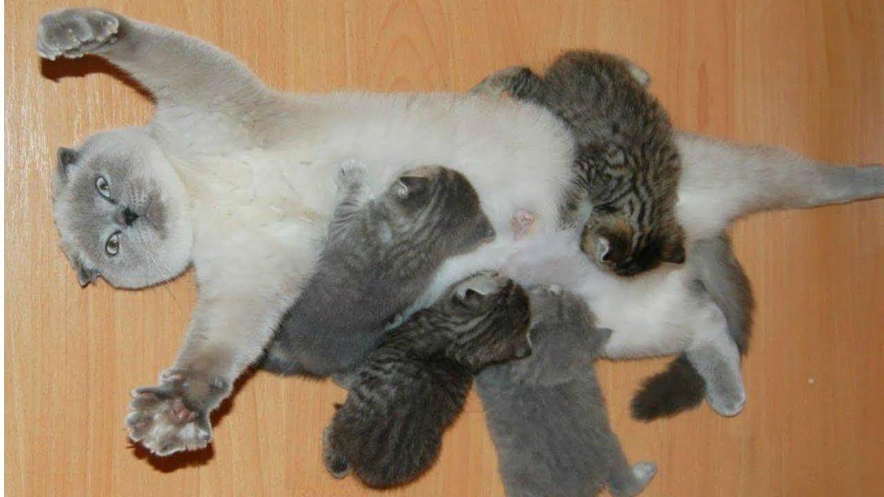 Cat Moms Nursing Their Cute Baby Kittens Videos ...