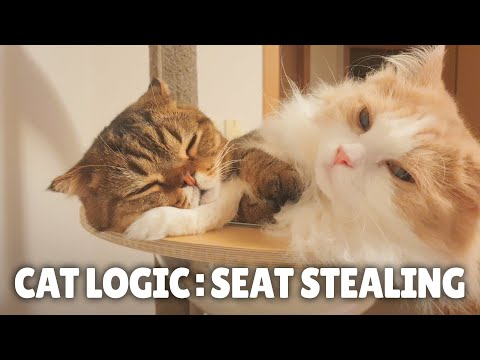 Cat Logic: Seat Stealing | Kittisaurus