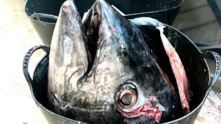EXTREMELY GRAPHIC: Tuna Cutting (150Kg/330Lbs)