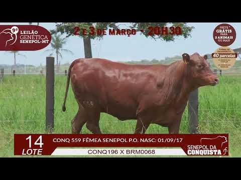 LOTE 14 CONQ 559
