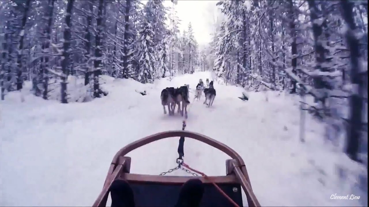 Reindeer   Husky Sleigh Rides in Rovaniemi cb7bae434